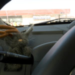 Flopsy the Jackalope - Silly America's jackalope mascot - in his spot in our road trip car.