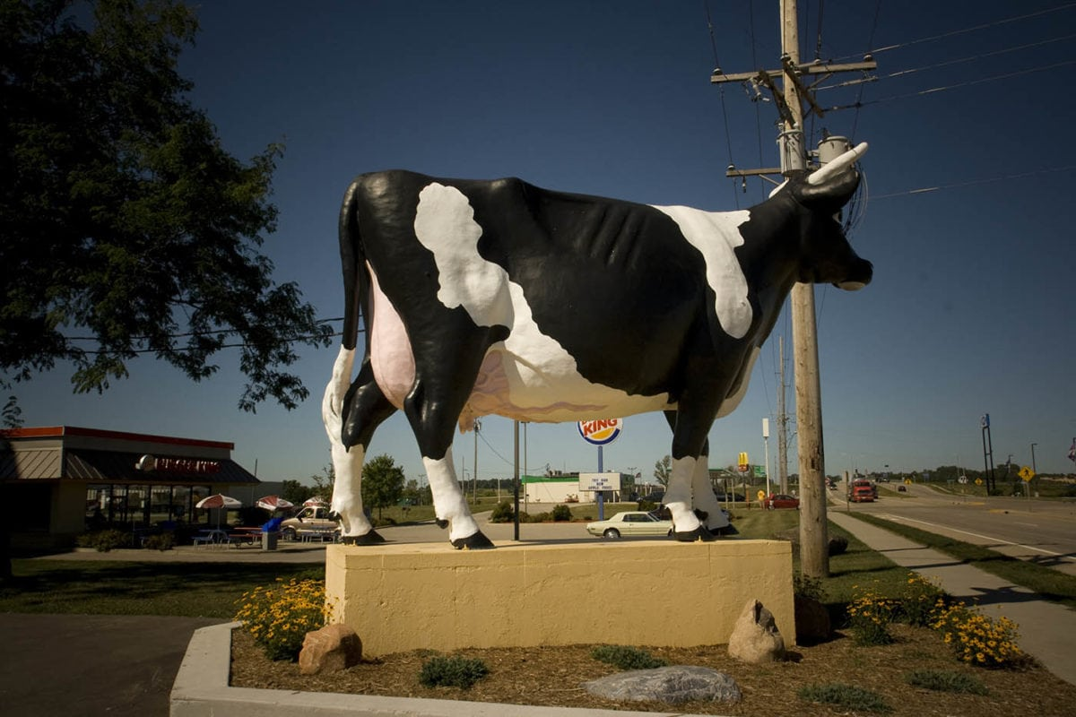 🐄 Sissy the Cow in DeForest, Wisconsin