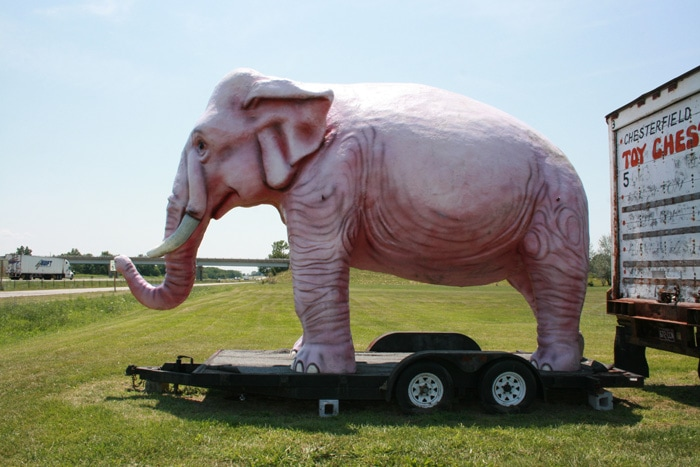Pink Elephant (Not in Glasses) in Livingston, Illinois