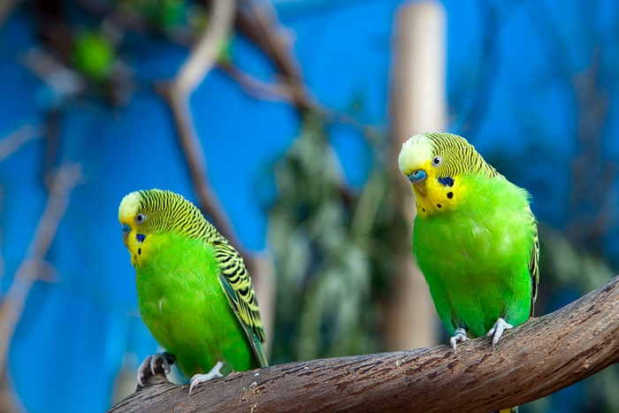 Woodland Park Zoo – Gone to the Birds